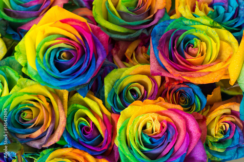Staande foto Roses Rainbow color of rose