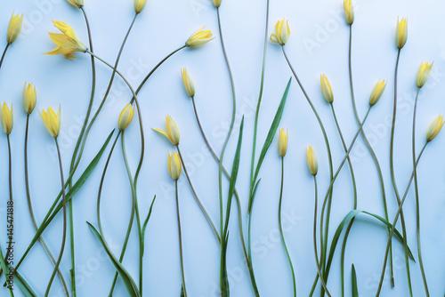 Fototapeta Flowers on a light blue background