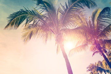 Tropical landscape with palm trees and sunny sky