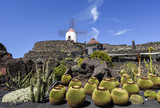 Beautifully designed cactus garden on Lanzarote, Canary Islands