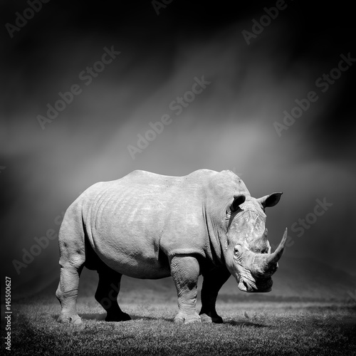 Fotobehang Neushoorn Black and white image of a rhino