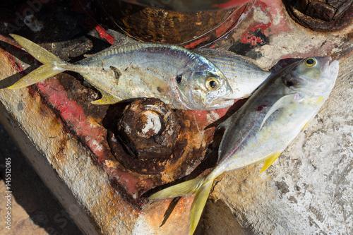 Varios pescados en la base del muelle. Poster