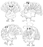 Doodle animal outline of turkey in four actions