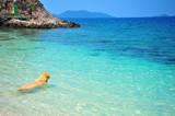 Golden Retriever Dog Relaxing on Beach