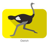 Ostrich running, animal body series, vector - 145552636