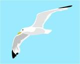gabbiano che vola illustrazione vettoriale - 145584872