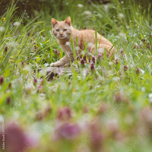 Cat hunting in garden. Young cute cat.