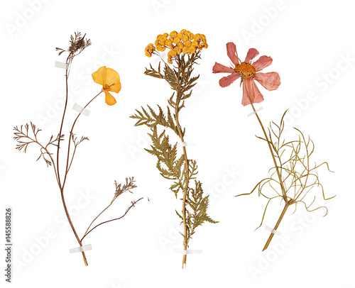 Set of wild dry pressed flowers and leaves - 145588826