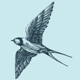 Swallow in flight, detailed hand drawing - 145593273