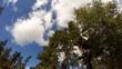 Wood against the sky. 4K.
