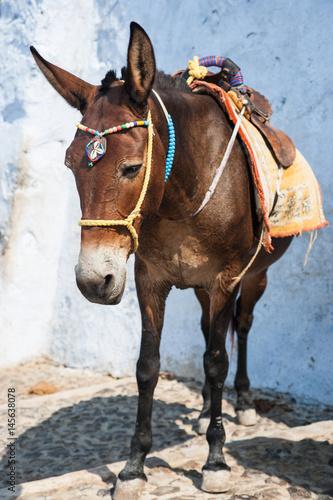 Aluminium Santorini donkey