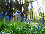 Spring forest,Northern Ireland