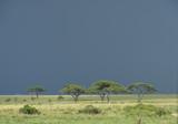Dark Monsoon Clouds, Serengeti - 145649627
