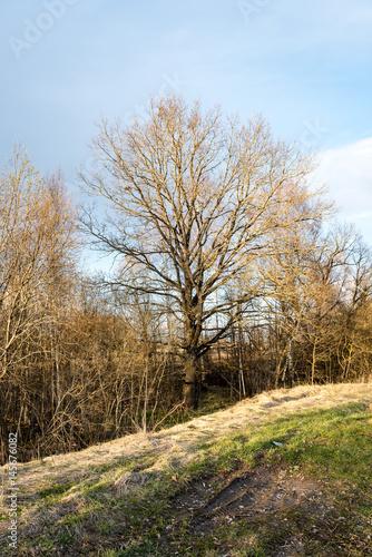 trees against blue sky Poster