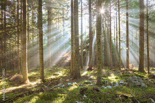 Poster Morning sun rays in forest tree landscape.