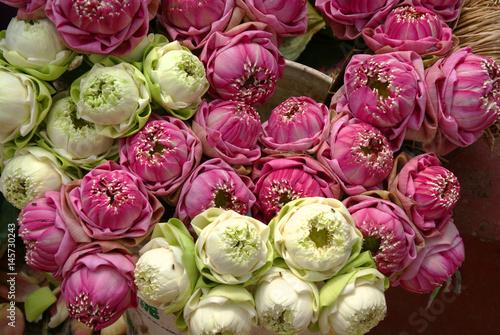 Lotusblüten vor Tempel Poster