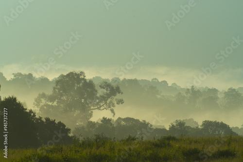 tropical rain forest - 145737277
