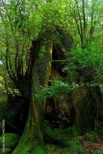 鹿児島 屋久島の自然