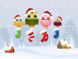 owls family with Christmas socks