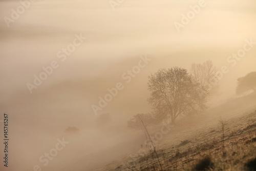 Naturlandschaft im Nebel - 145765267