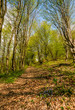 trail through the forest in springtime