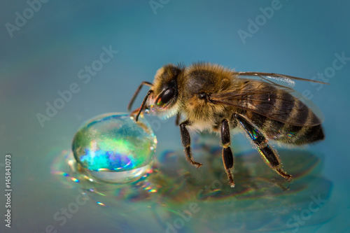 Fotobehang Bee Macro image of a bee on a reflective surface drinking a honey drop from a hive