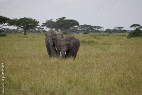 Poster Elephant family 4