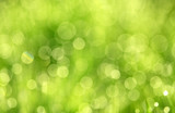 Green abstract background - 145857467