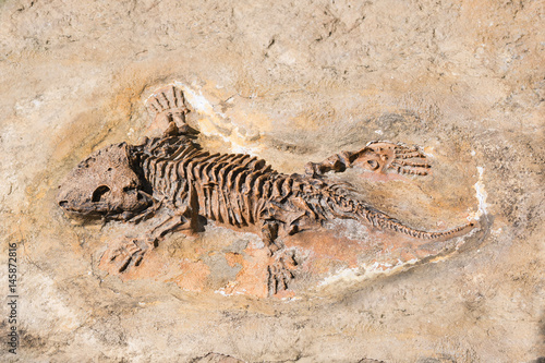 Fossil of prehistoric lizard skeleton on the rock Poster