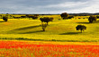 Leinwanddruck Bild - FARBIGES ALENTEJO