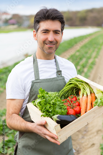 Portrait of an attractive middle aged farmer harvesting vegetables in a field -  Poster