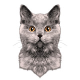 cat breed British Shorthair face sketch vector color drawing