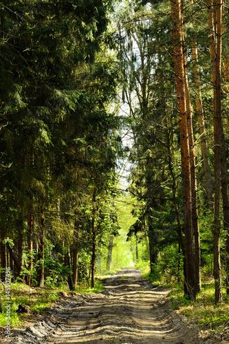 Papiers peints Route dans la forêt Leśna droga w gęstym lesie.