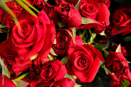 Staande foto Roses Close up Natural red roses background.(Selective focus)