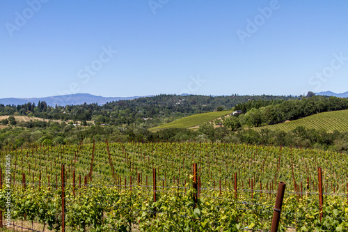 Vineyard Vineyards in Russian River Valley in Spring, Sonoma County