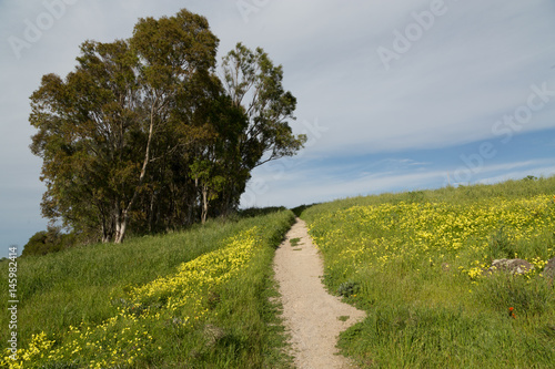 Plakat Trail Through A Meadow of Green Grasses