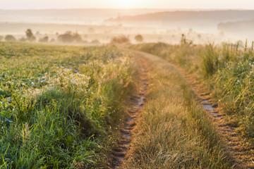 Gravel countryside road on sunrise with soft light effect. Sunny warm summer landscape. © bilanol