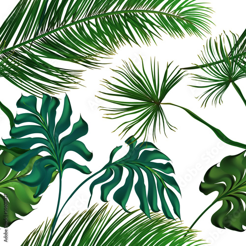 Naklejka na szybę Tropical palm leaves set, drawn vector collection. Isolated on background. Decorative elements, botanical pattern, trendy design. Seamless pattern.