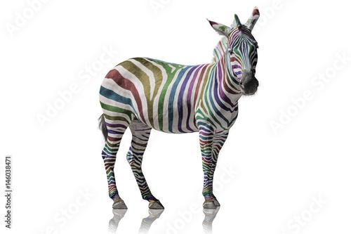 Regenbogen Zebra - 146038471