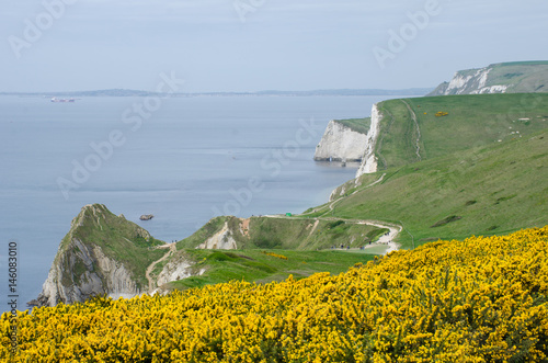 Dorset Coast on route to Durdle Door Poster