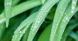water drops on green grass macro