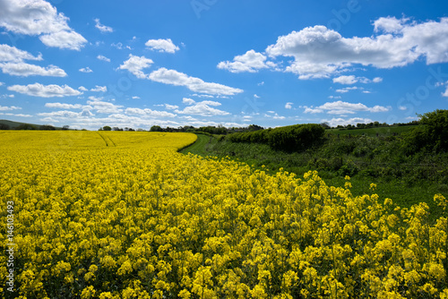 Foto op Canvas Pistache Rapeseed in the Rolling Sussex Countryside