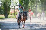 Pony games - 146119892