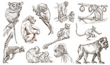 Animals around the World. Monkeys and Apes. An hand drawn full sized pack. Line art. - 146121451