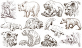 Animals around the World. Bears. An hand drawn full sized pack. Line art. - 146122011