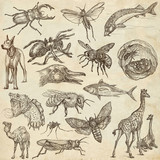Animals around the World - An hand drawn full sized pack. Hand drawings. Line art. - 146122246