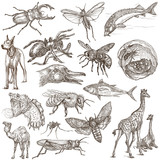 Animals around the World - An hand drawn full sized pack. Hand drawings. Line art. - 146122447