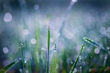 Blurry morning grass macro.