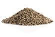 Seed of a Milk Thistle (Silybum marianum)