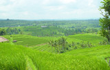 Jatileuwih green terraced rice fields panorama view underneath cloudy sky in Bali, Indonesia.